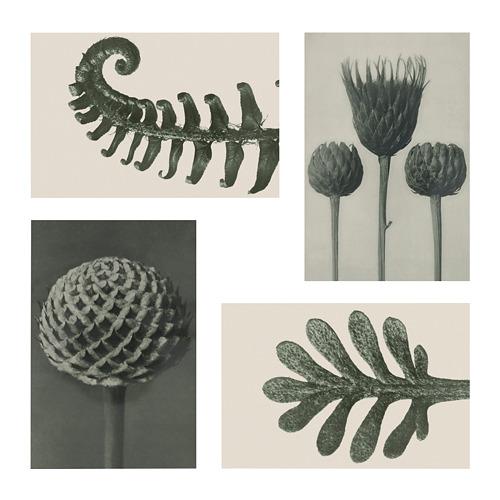 YLLEVAD - 藝術卡, 植物細節   IKEA 香港及澳門 - PE809677_S4