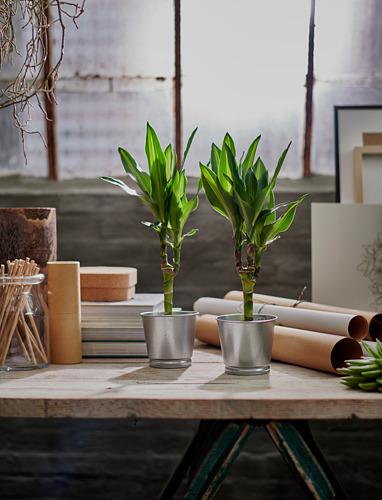 BINTJE - plant pot, galvanised | IKEA Hong Kong and Macau - PE754507_S4