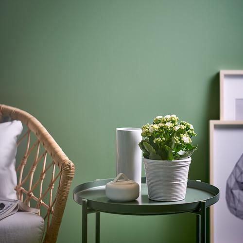 KALANCHOE - 盆栽植物, 長壽花/多款 | IKEA 香港及澳門 - PE754513_S4