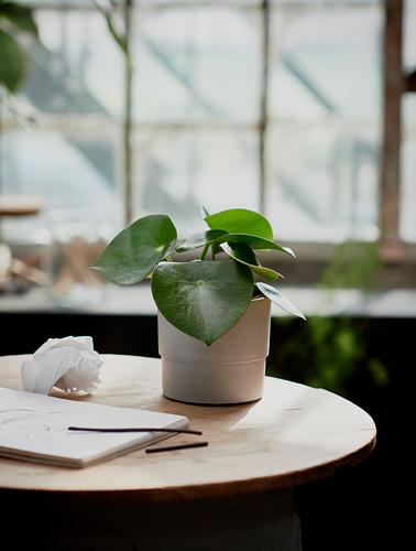 NYPON - plant pot, in/outdoor grey | IKEA Hong Kong and Macau - PE754519_S4