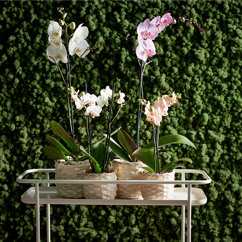 KRYDDPEPPAR - plant stand, in/outdoor beige | IKEA Hong Kong and Macau - PE754521_S4
