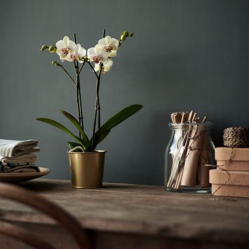 DAIDAI 花盆