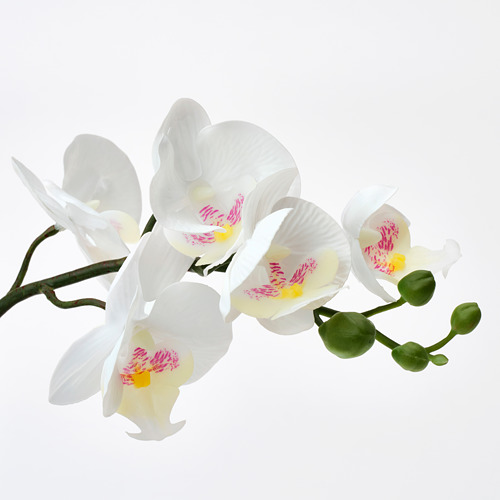 FEJKA - artificial potted plant, Orchid white | IKEA Hong Kong and Macau - PE755670_S4