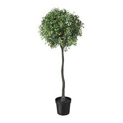 FEJKA - 人造盆栽, 室內/戶外用/黃楊 花莖   IKEA 香港及澳門 - PE718060_S3