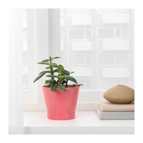 PAPAJA - 花盆, 紅色   IKEA 香港及澳門 - PE720695_S4