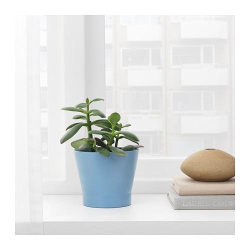 PAPAJA - 花盆, 藍色 | IKEA 香港及澳門 - PE720698_S4
