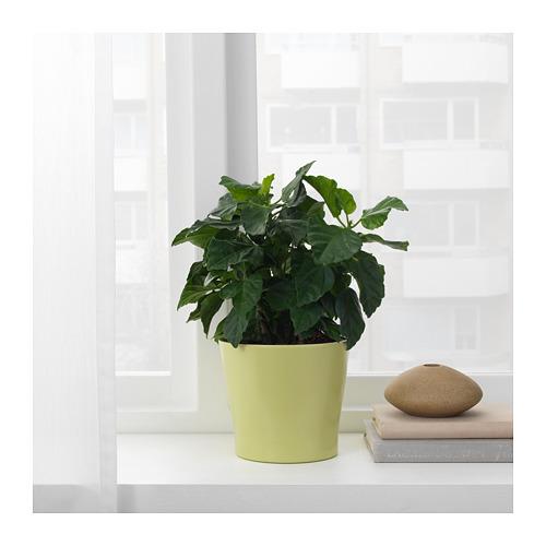 PAPAJA - plant pot, green | IKEA Hong Kong and Macau - PE720677_S4
