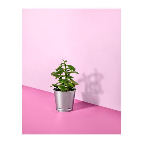 BINTJE - plant pot, galvanised | IKEA Hong Kong and Macau - PH143327_S4