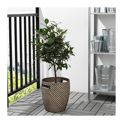 RÅGKORN - plant pot, in/outdoor natural | IKEA Hong Kong and Macau - PE721644_S4