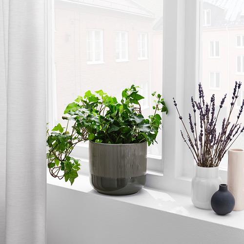 GRADVIS - 花盆, 室內/戶外用 深灰色   IKEA 香港及澳門 - PE821001_S4