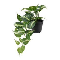 FEJKA - artificial potted plant, in/outdoor Golden Pothos   IKEA Hong Kong and Macau - PE819180_S3