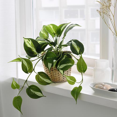 FEJKA - 人造盆栽, 室內/戶外用 黃金葛 | IKEA 香港及澳門 - PE819181_S4