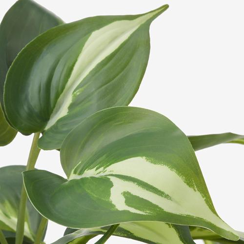 FEJKA - 人造盆栽, 室內/戶外用 黃金葛 | IKEA 香港及澳門 - PE819182_S4