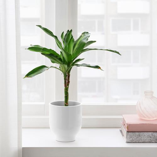 DRÖMSK plant pot
