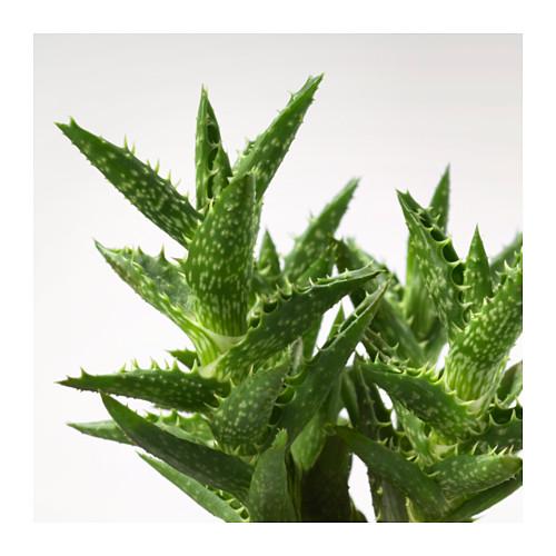 SUCCULENT 盆栽植物