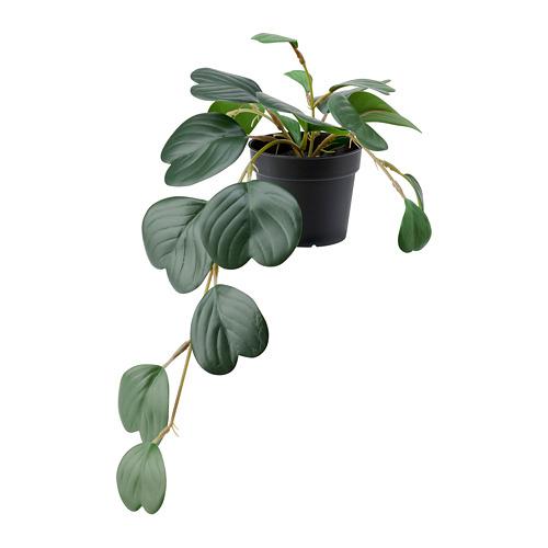 FEJKA - 人造盆栽, in/outdoor hanging/Peperomia   IKEA 香港及澳門 - PE782568_S4