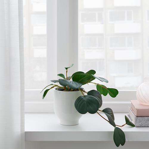 FEJKA - 人造盆栽, in/outdoor hanging/Peperomia   IKEA 香港及澳門 - PE782570_S4