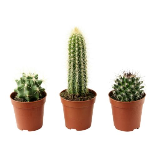 CACTACEAE - potted plant, cactus/assorted | IKEA Hong Kong and Macau - PE181264_S4
