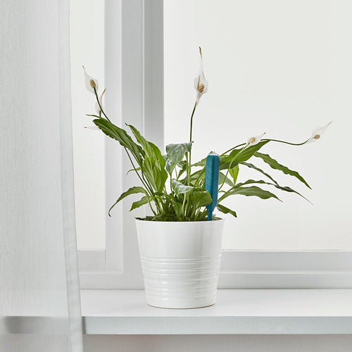 CHILIPULVER - 澆水感應器, 綠色   IKEA 香港及澳門 - PE695885_S4