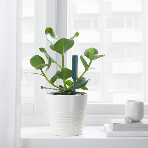 CHILIPULVER - 澆水感應器, 綠色   IKEA 香港及澳門 - PE717635_S4