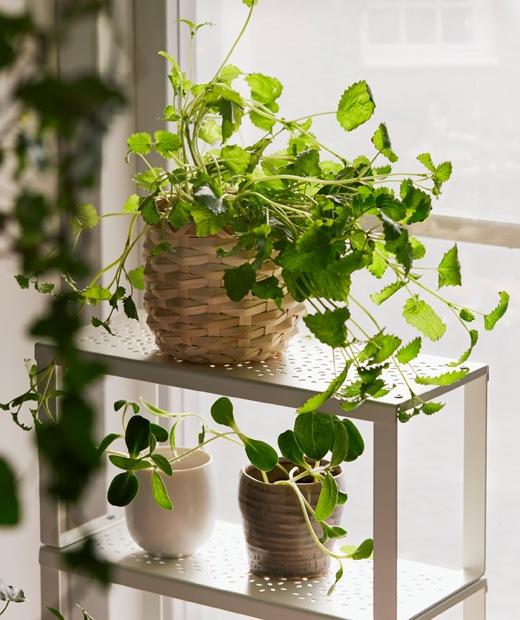 陽光充沛的窗台上放有一個小巧薄身VARIERA層架,架上擺放幾個種有多葉植物的小花盆。