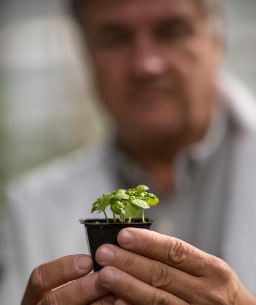 兩隻手捧起一個種有花苗的方形小塑膠花盆,人物模糊不清。
