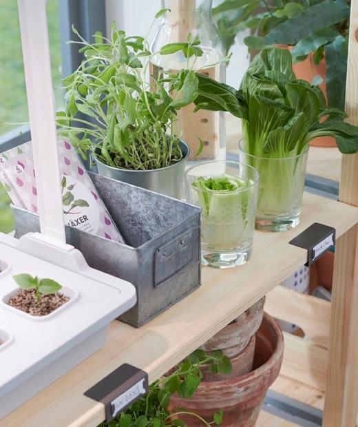 裝有窗框的大窗旁有幾個淺色原木書架厭放滿盆栽和植物。