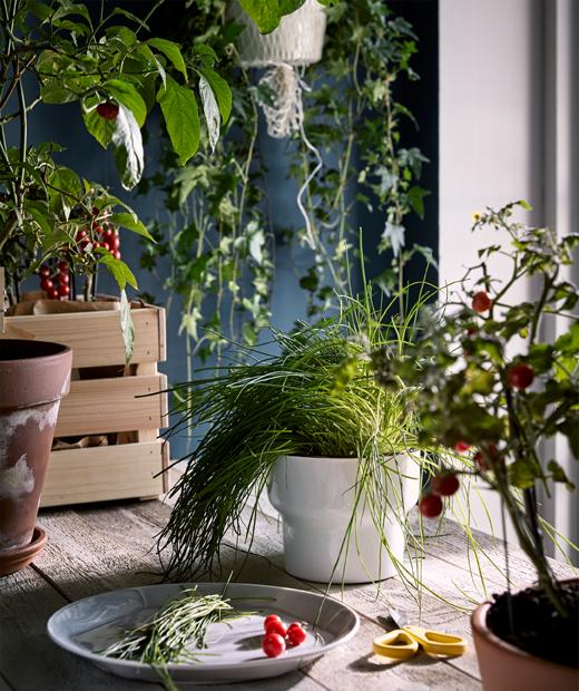 在類似廚房的環境中,原木檯面上放滿植物,還有一隻盛載新鮮收割蔬菜的碟。