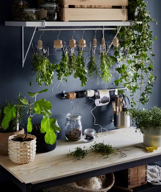 木檯面放了幾盆新鮮香草,上面的衣架掛了一束束乾香草。