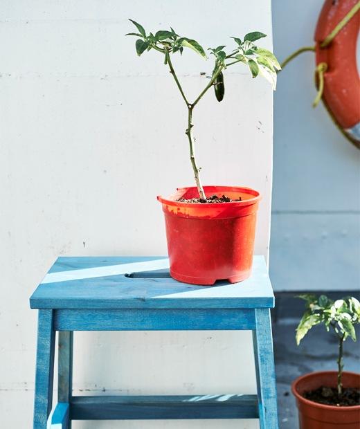 塗上藍色的腳踏,上有一盆橙色盆栽。