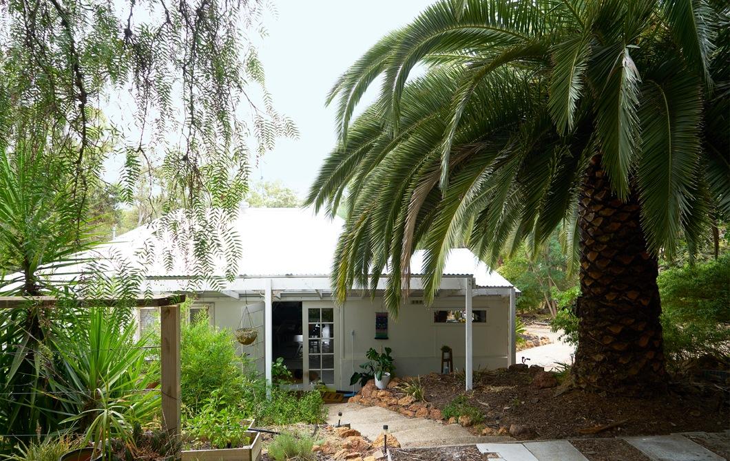 白色的平房四周長滿大樹,包括一棵巨型棕櫚樹。