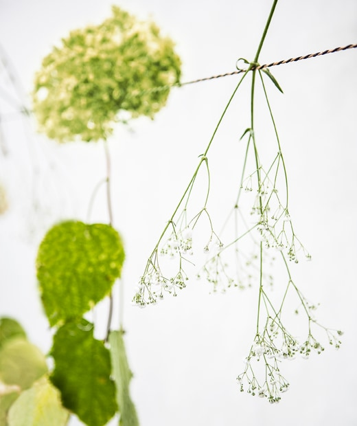 Single flower stems hanging on a string.