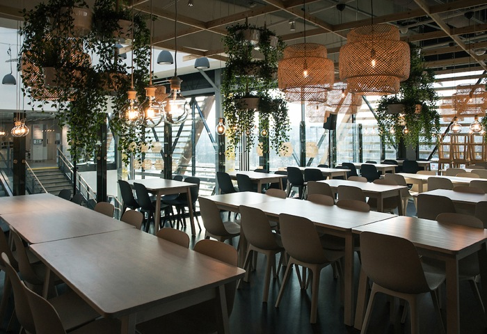 A room with long tables and chairs, hanging plants and rattan lampshades.