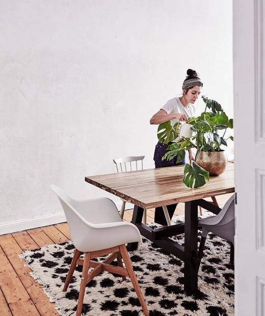 Julia在大木檯上為龜背竹澆水,旁邊有幾張椅子,背後有一面空白的牆。