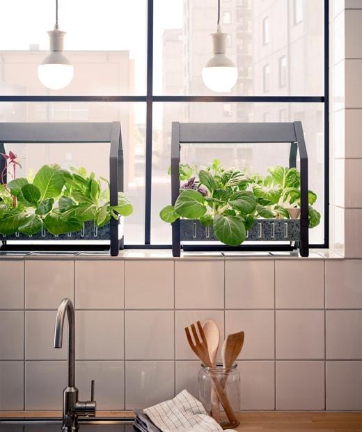 窗台上放有種植工具,種滿蔬葉,上方有燈膽,下方是廚房星盆。