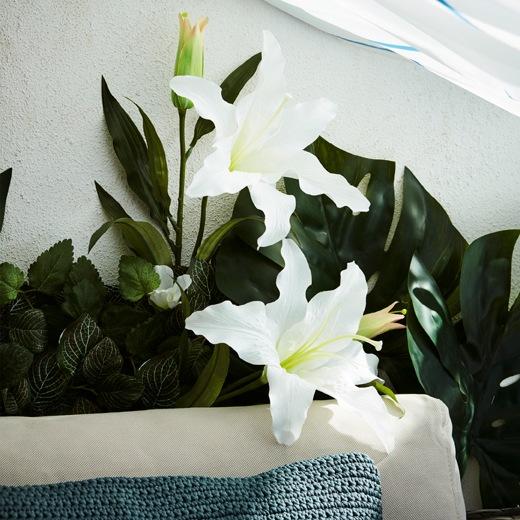 梳化的一部分、覆蓋露台大部分牆身的人造植物,以及用作遮光的浴簾。