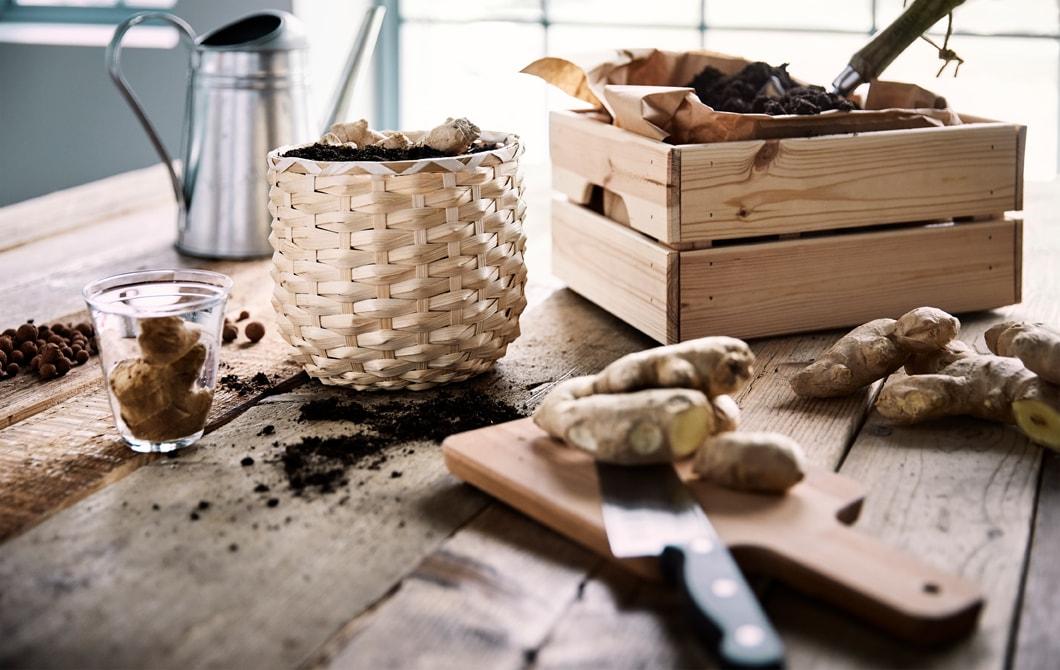 木檯上種於藤製花盆的薑,旁邊放有一個木箱,裡面有啡色紙和泥土。