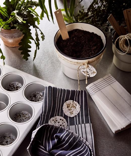 綠色植物、以小蛋糕盤自製種子莢,以及米色花盆禮物,花盆綁上自製種子莢。