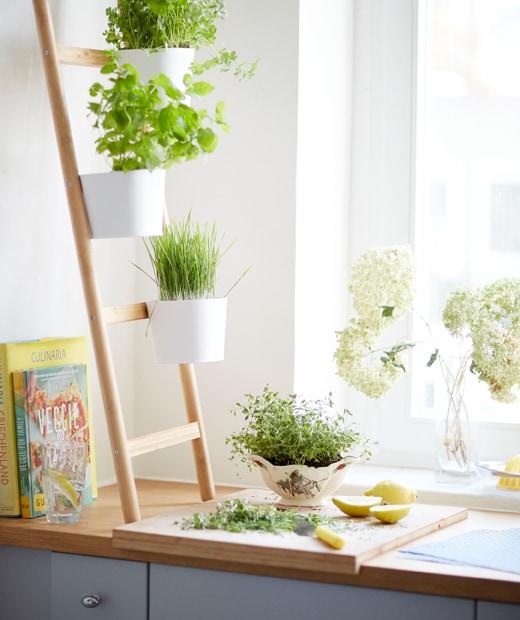 階梯式花盆架的花盆裡種有香草,放在木櫃台板和灰色廚櫃上。
