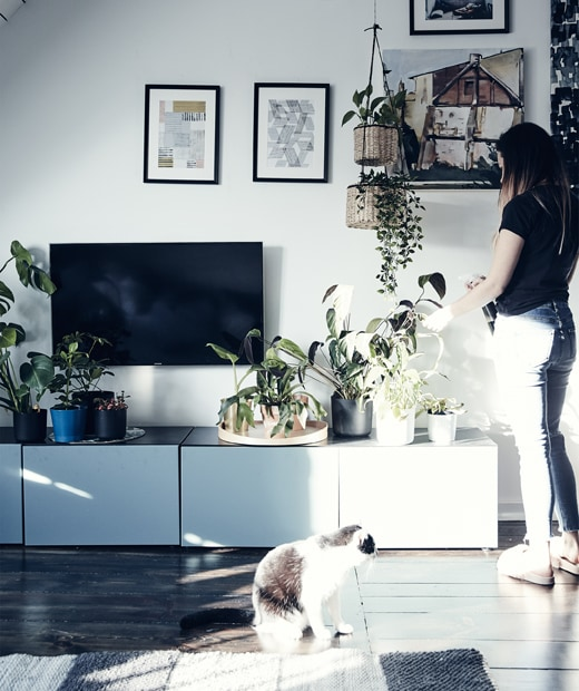 Katarzyna tending to plants on a low TV storage unit in her living room.
