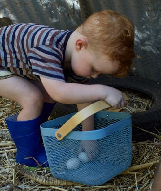 一名小孩用藍色籃收集新鮮雞蛋。