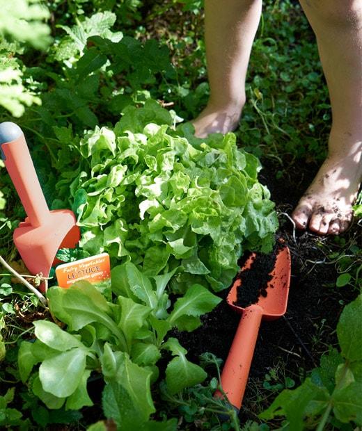 放在香草田的紅色塑膠園藝工具。