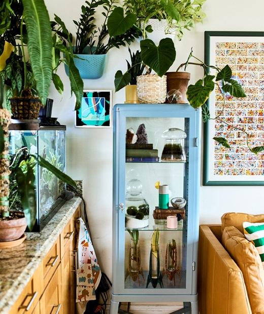不同大小的植物放在魚缸裡、牆上和玻璃貯物櫃裡,另外有皮梳化和畫框。