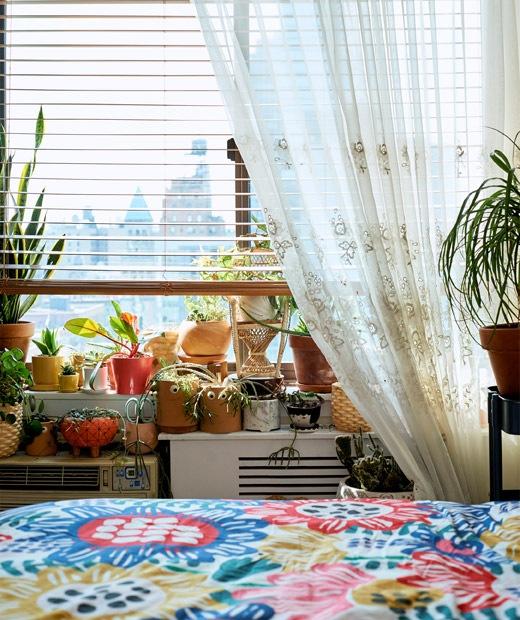各種盆栽放在彩色睡床邊的窗台上。