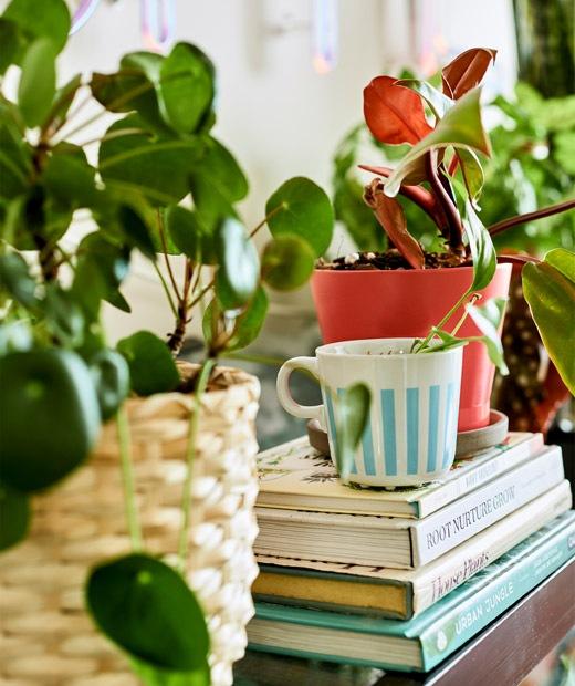 一堆書上的茶杯裡有一棵植物,四周還有其他盆栽。
