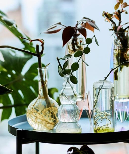 托盤几上放有以玻璃器皿栽種的小植物和枝葉。