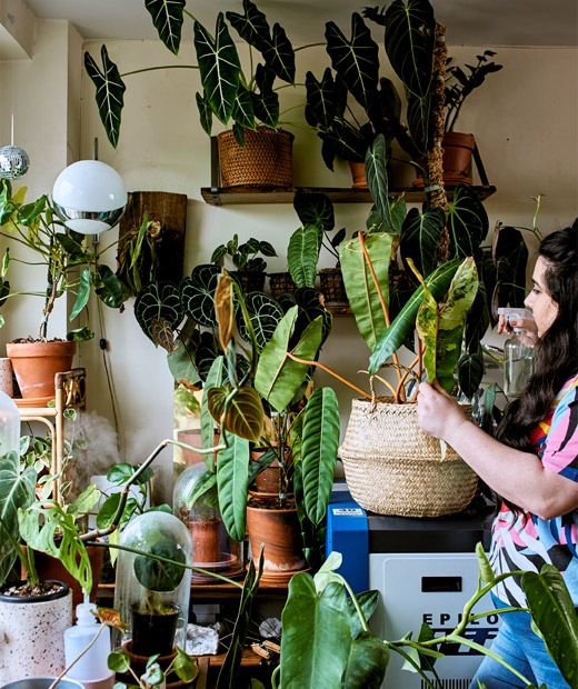 家居辦公室的窗旁,有一位年輕女士為罕見熱帶植物澆水。