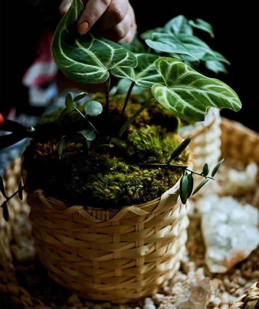 托盤上的竹製花盆盆栽。