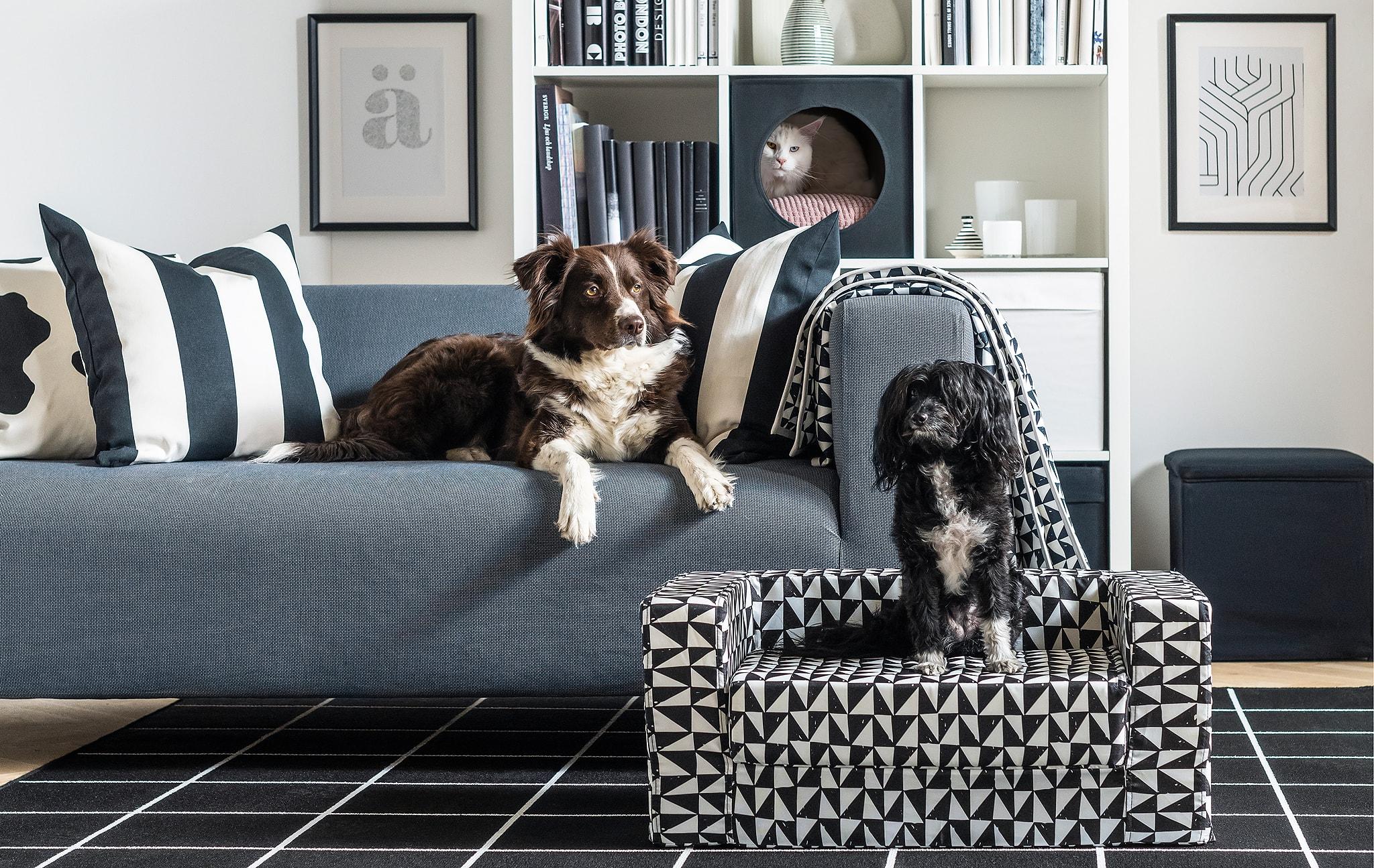 在客廳內有兩隻狗,一隻躺在梳化上,另一隻坐在前方的梳化上,還有一隻貓在後方書架上的貓屋探頭而出。