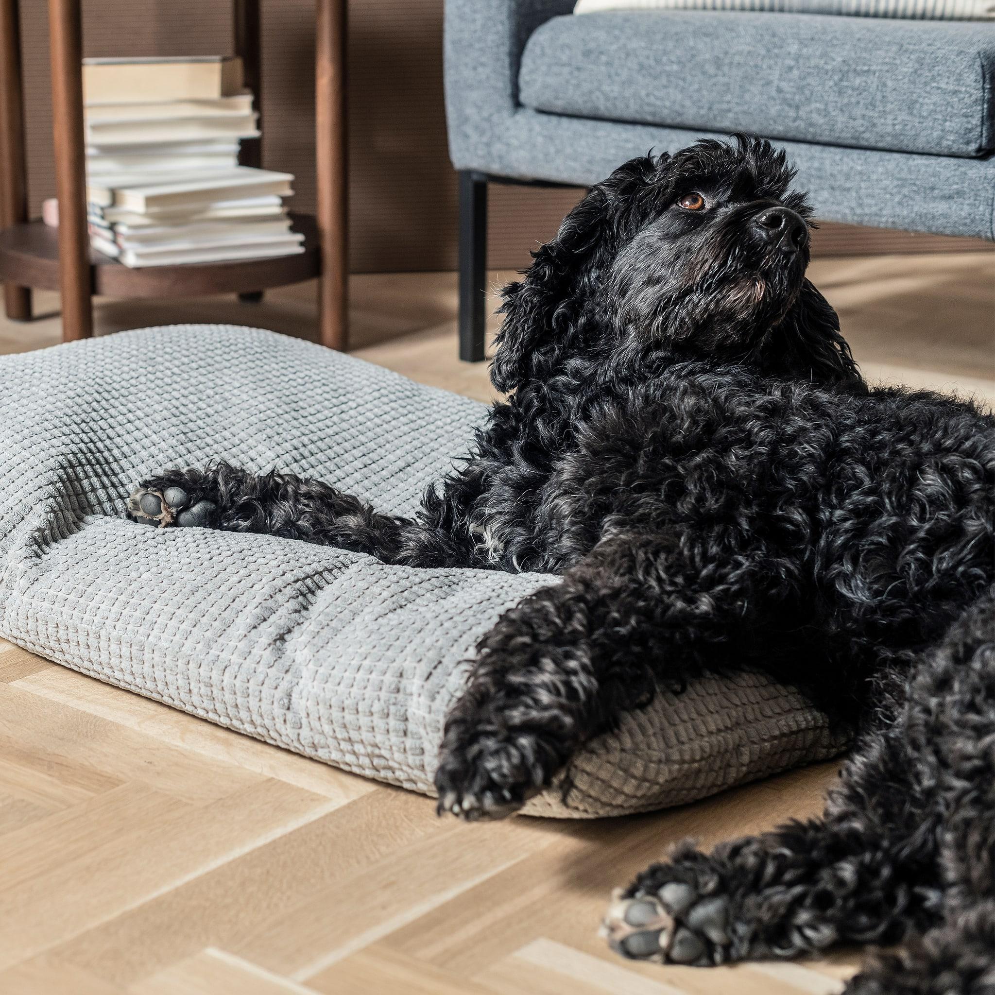 在客廳中有一隻狗半躺在地上的咕上,背後的角几上放著一疊書,還有一張扶手椅。